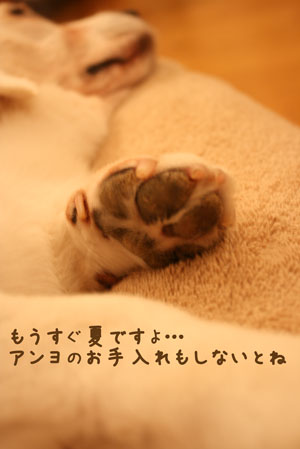 5_20100630204208.jpg