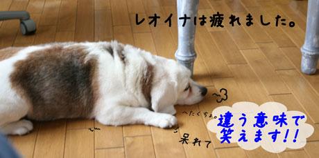 5_20100714134607.jpg