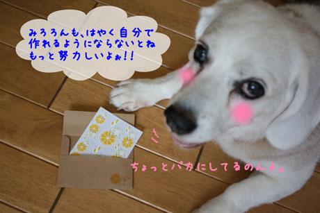 5_20100727114218.jpg