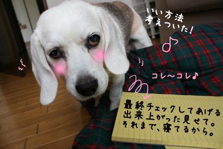 5_20100918140812.jpg