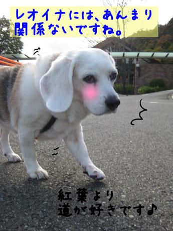 5_20101116145309.jpg