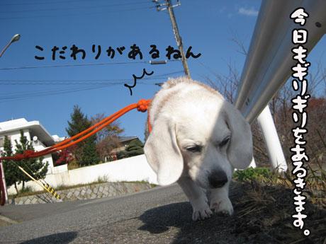 5_20101126150422.jpg