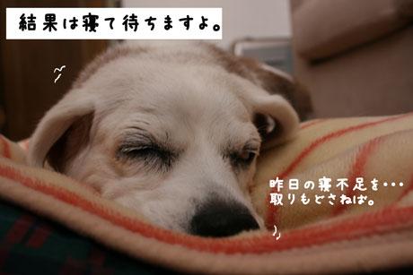 5_20101128121901.jpg