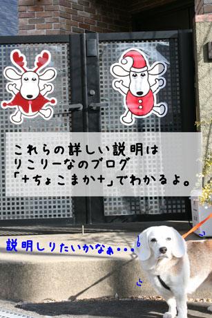 5_20101209172714.jpg