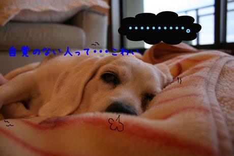 5_20110103173435.jpg