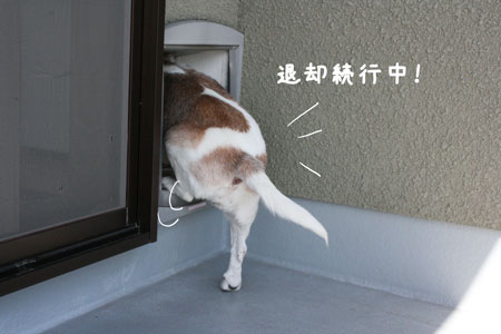 6_20091021135129.jpg