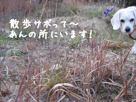 6_20091207165951.jpg