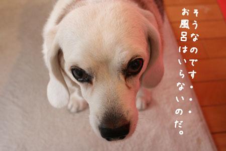6_20100118165752.jpg
