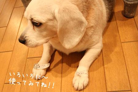 6_20100122175942.jpg