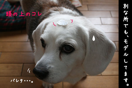 6_20100215174845.jpg