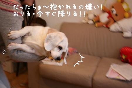 6_20100309160116.jpg