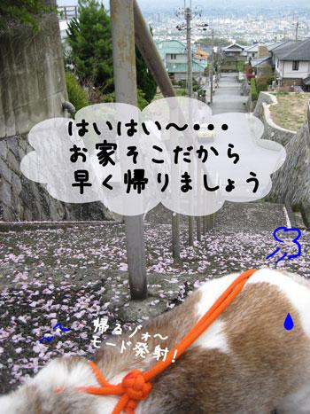 6_20100413160230.jpg