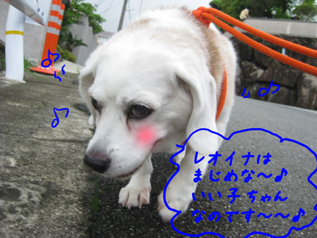 6_20100627143333.jpg