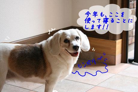 6_20100628163746.jpg