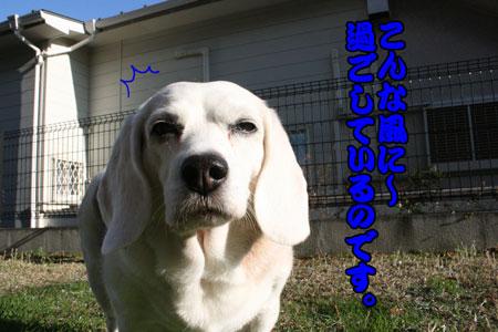 7_20091202152500.jpg