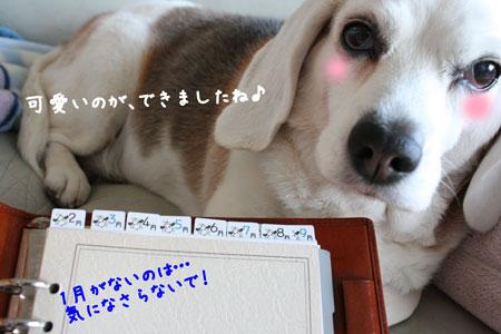 7_20100221175656.jpg