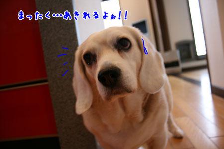 7_20100325205936.jpg