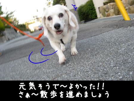 7_20100426173658.jpg