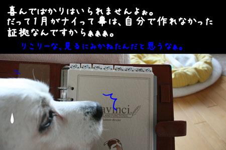 8_20100221175656.jpg