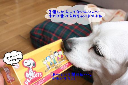 8_20100223112735.jpg