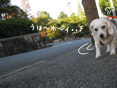 8_20101123162923.jpg