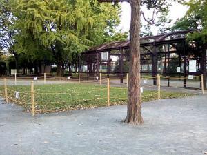 10月21日の中庭