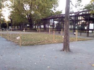11月4日の中庭
