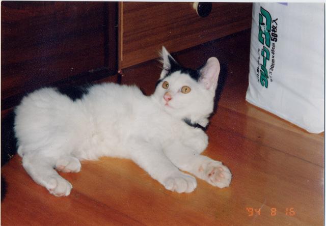 nori1994.jpg