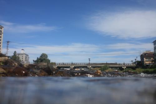中津川を遡上(そ上)する鮭(さけ)の目線