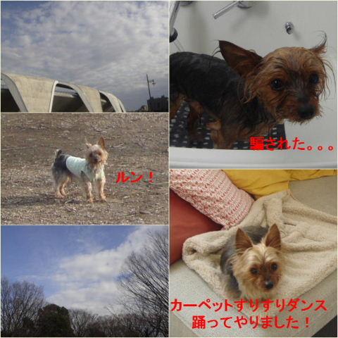 100209komazawamaruarairingo.jpg