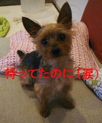 2010_0704shinokubo0035.jpg