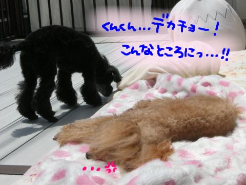 …りんちゃん、オトナになったねぇ….