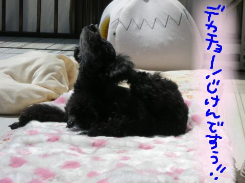 確かに事件かも…黒犬が実はアザラシだったとわっ!