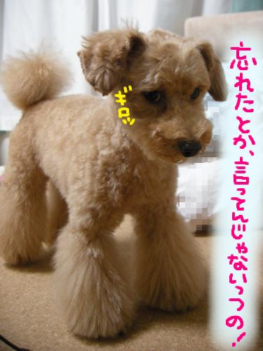 …りんちゃん、こわっ!!