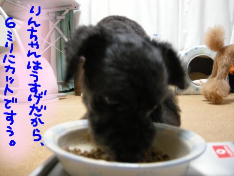 引きしまったプリケツ、地肌スケ系…(汗