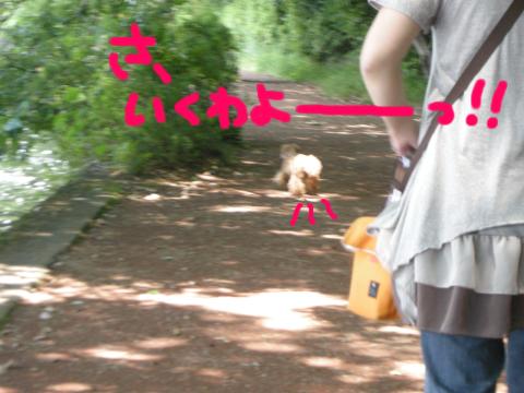 マッハで飛び出して行きました、ネバ系犬