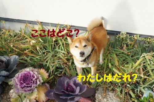 DSC07831_20120110140644.jpg
