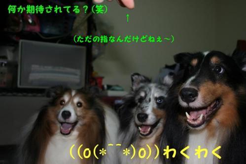 おバカな3兄弟