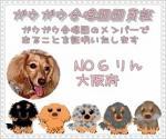NO.6  団員証☆