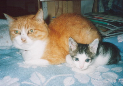 ママとチビハヤ
