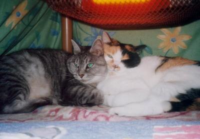 アビとユメコ2