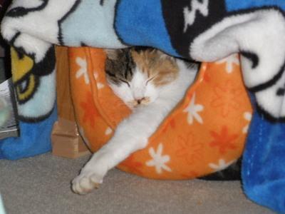 スモモのベッド
