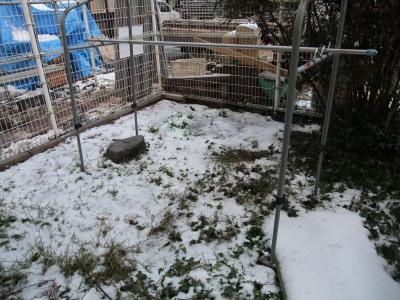 21.12.19庭の雪