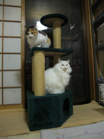 和室のタワー3