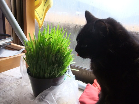 メイ 草食べる?