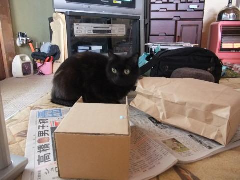 メイと袋と箱