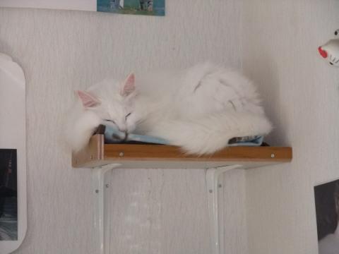 セーラ 棚のベッドで寝る