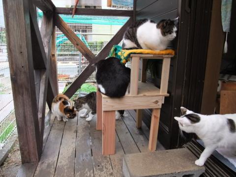 猫用台と5にゃん