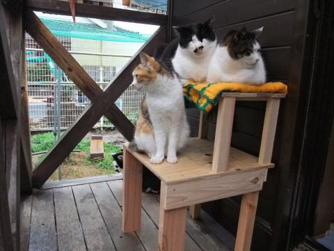 猫用台3ニャン
