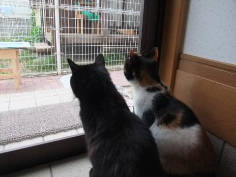 メイ マリ 玄関から見る